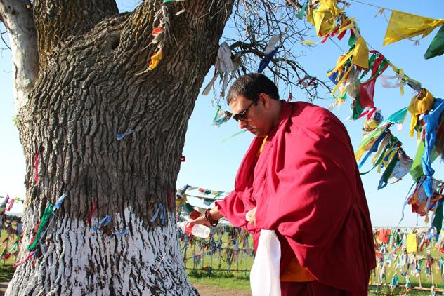 «Одинокий тополь» из Калмыкии, посаженный буддийским монахом, завоевал третье место в конкурсе «Европейское дерево года–2020»
