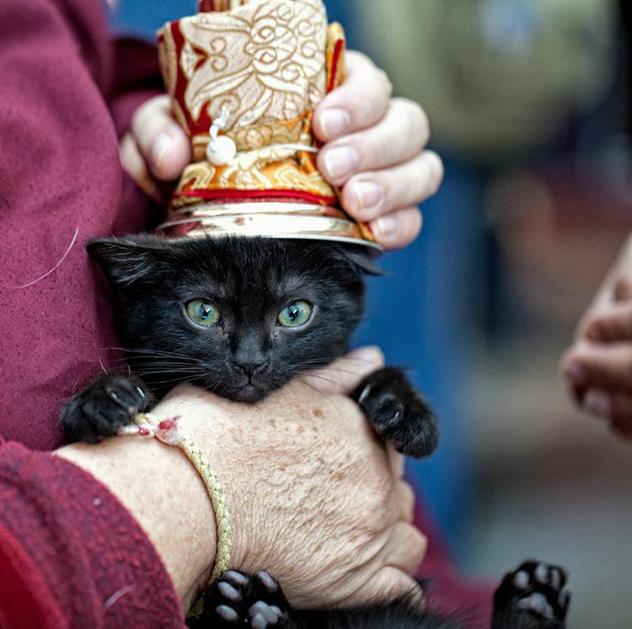День помощи животным с ламой Сопой Ринпоче в Москве
