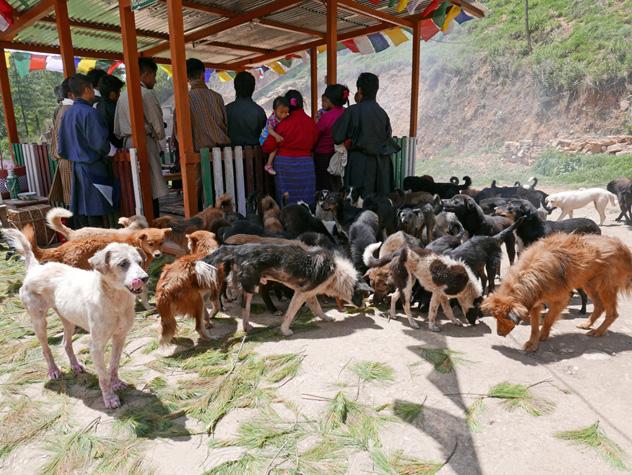 Помощь бездомным собакам. Благодарственное письмо от ламы Сопы Ринпоче