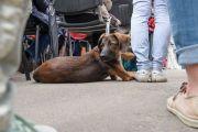 День помощи животным с ламой Сопой Ринпоче. Регистрация