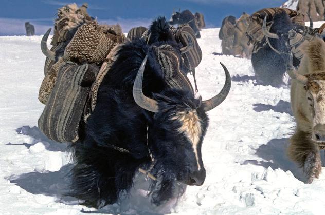 Знакомство с тибетскими обычаями. Почему вьючные мешки ткут с узором в полоску