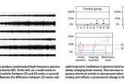 Опытные созерцатели вырабатывают в мозге обнаруженнные при помощи ЭЭГ синхронные высокочастотные гамма-волны. Слева: когда монах приступает к медитации, начинает действовать волны гамма-диапазона (между 25 и 42 циклами в секунду). На диаграммах справа демонстрируется различие между десятью новичками и восемью опытными созерцателями в  активности гамма-волн (относительно мозговых волн, подверженным более медленным изменениям). Данное увеличение синхронной высокочастотной активности также имеет место, когда монахи находятся в состоянии спокойного отдыха и отражает явные изменения в структуре их мозга.