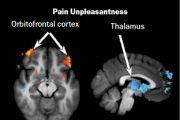 В ходе экспериментов было показано, что чем значительнее медитация по развитию осознанности уменьшала боль от прикосновения горячего металла к правой лодыжке, тем выше наблюдалась активность мозга в лобных структурах, участвующих в когнитивном контроле, и тем ниже – активность в таламусе (правый нижний рис.). Скорее всего, данная активность препятствует поступлению вредоносной информации или снижает ее еще до достижения коры. Жёлто-красные обозначения указывают на увеличение, а синие на снижение активности.