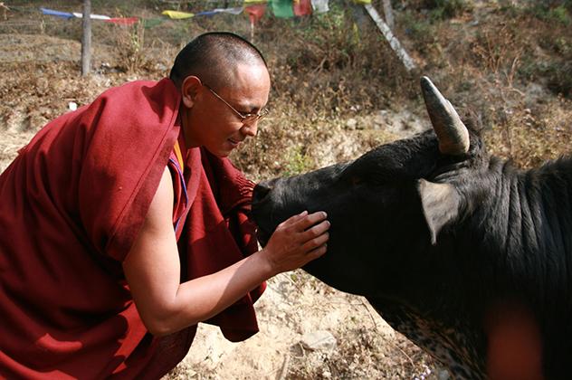Буддизм и эволюция: новый взгляд на человеческую природу и основы нравственности. Часть 3