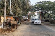 Кортеж Его Святейшества Далай-ламы направляется через сельскую местность к месту буддийского паломничества. Санкиса, штат Уттар-Прадеш, Индия. 3 декабря 2018 г. Фото: Лобсанг Церинг.